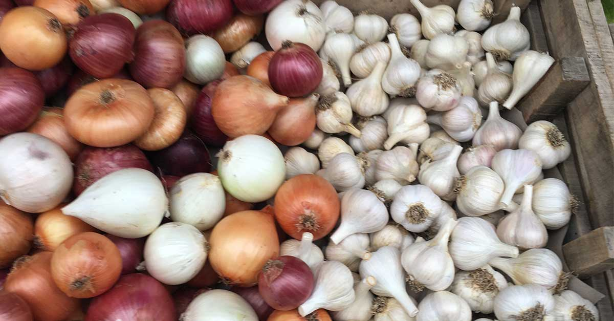 Garlic at the DTFM