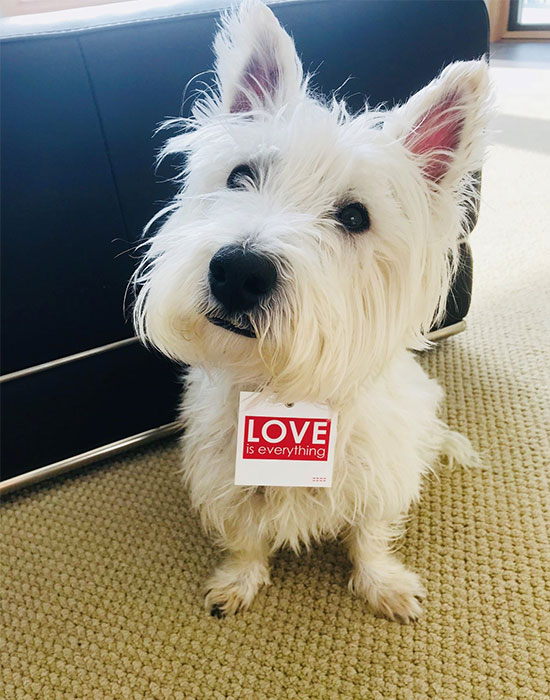 Dog with love tag