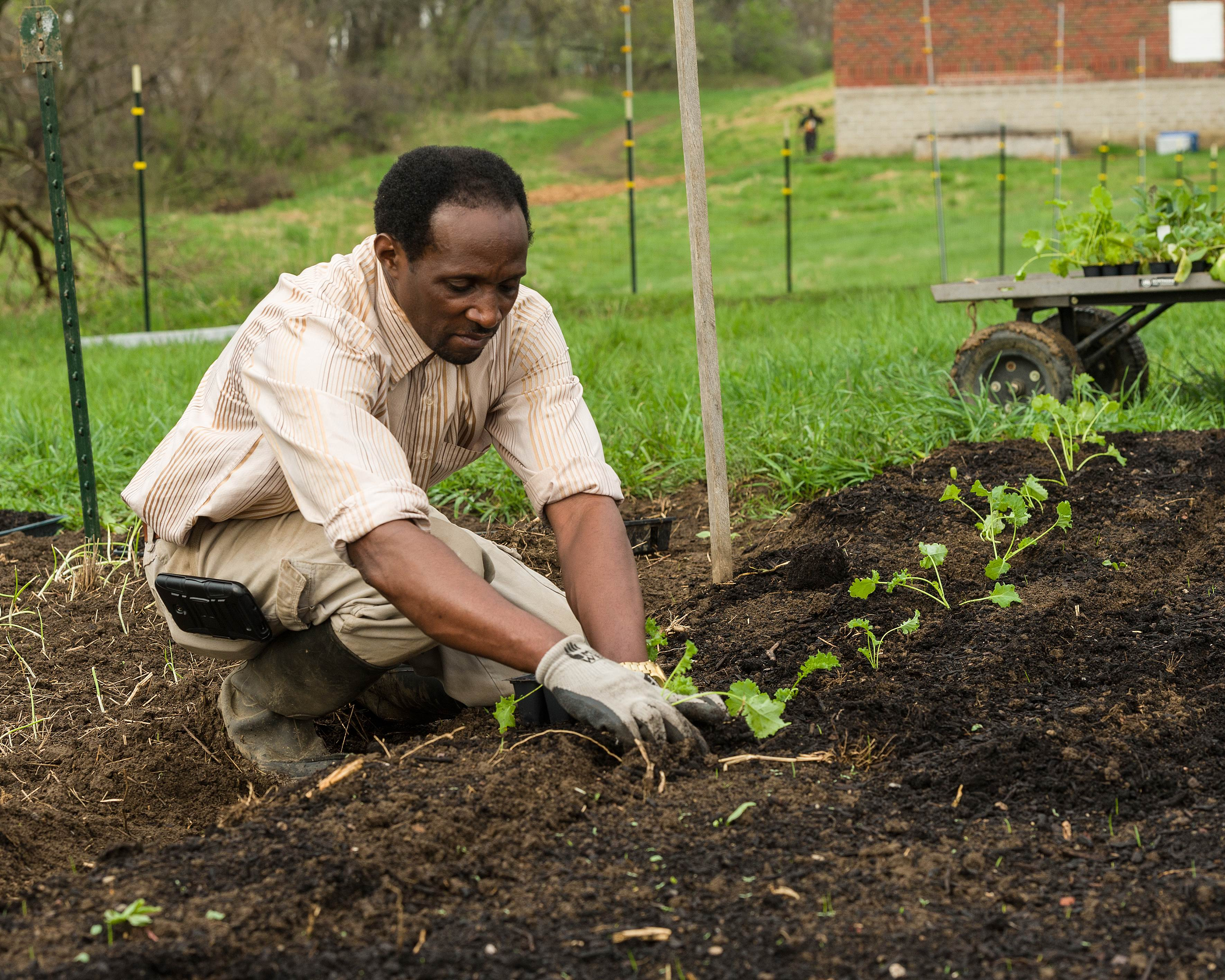 Alex Congera Planting Kale